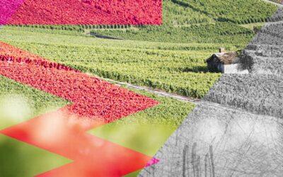 Waris-Hubert topchampagne uit Avize